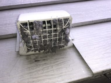 how to keep birds out of dryer vent