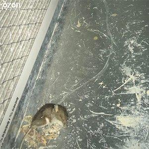 squirrel cleaner